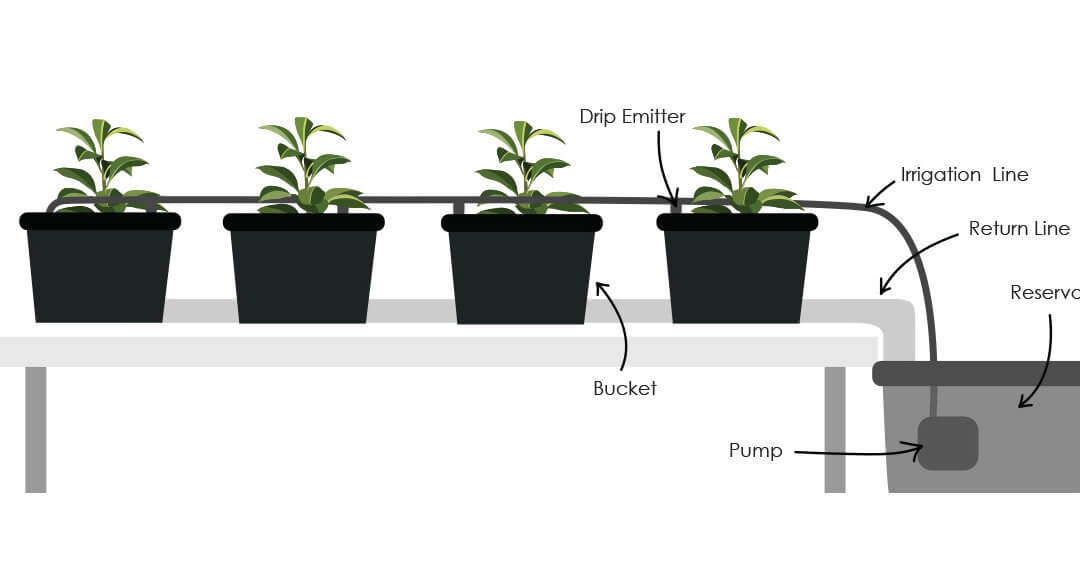 Simple Hydroponic Dutch Bucket System
